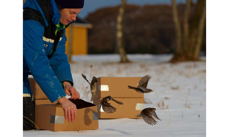 Why aren't house sparrows as big as geese?