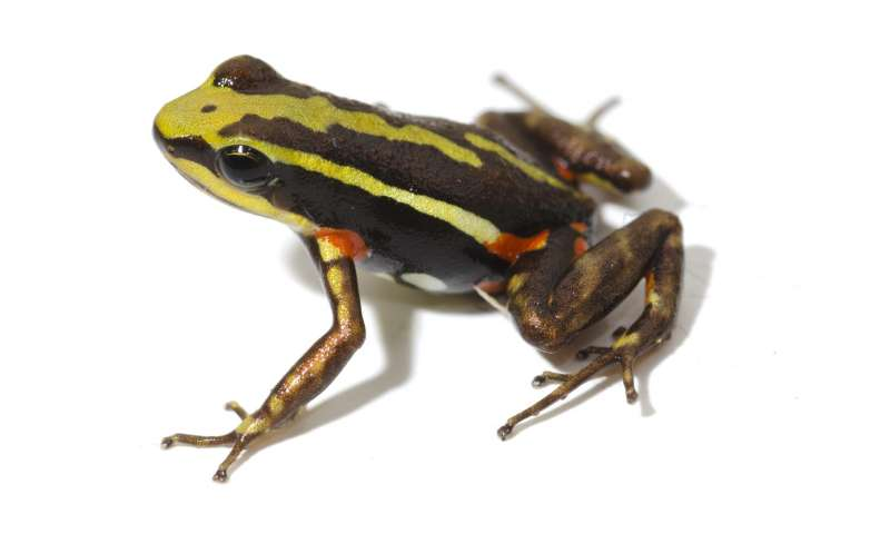 Why poison frogs don't poison themselves