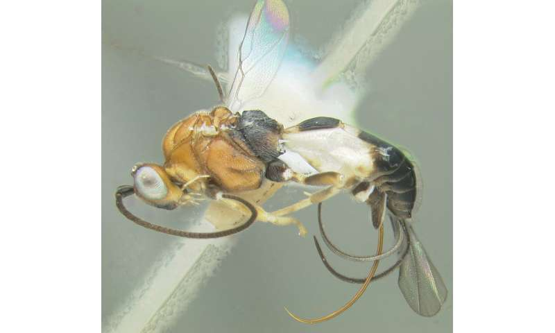 With flying colors: Top entomology students honoured with wasp species named after them