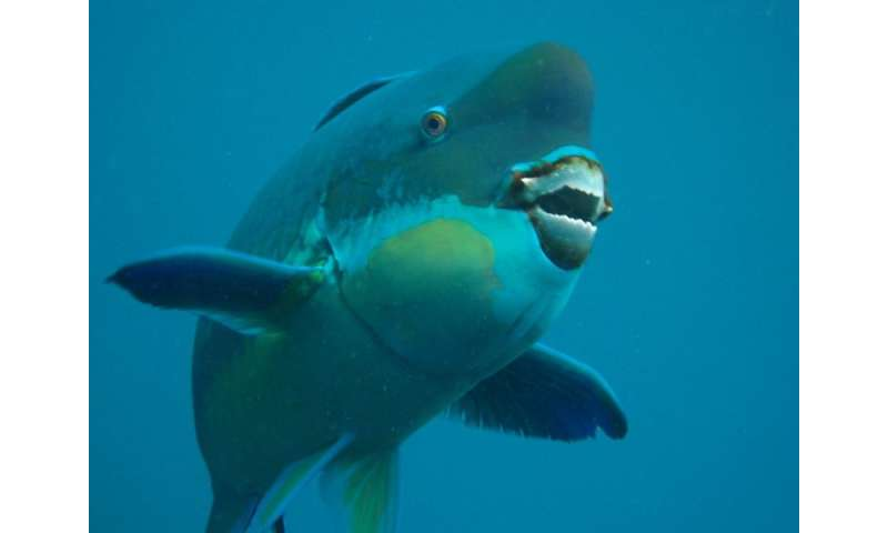 X-rays reveal the biting truth about parrotfish teeth