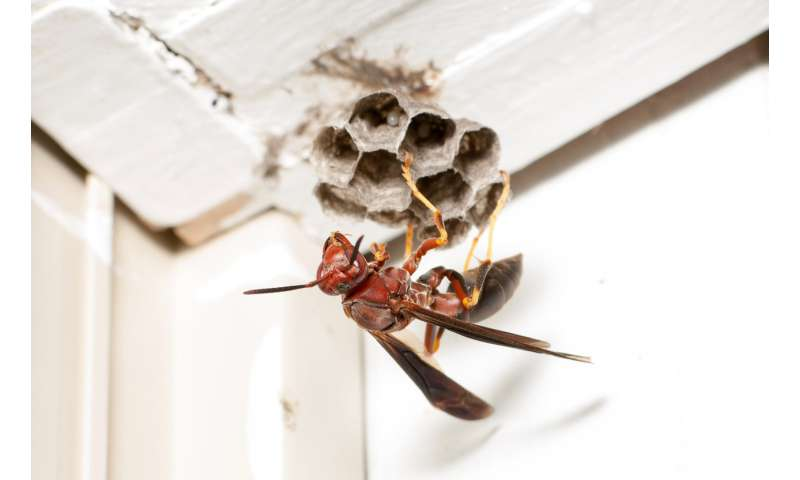 Scientists investigate how different houses and lifestyles affect which bugs live with us