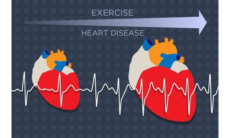 Study identifies key player in heart enlargement