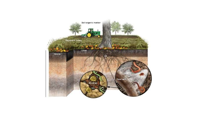 WSU researcher sees huge carbon sink in soil minerals