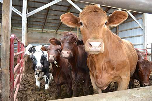 Improving the Illinois dairy industry, one farm at a time