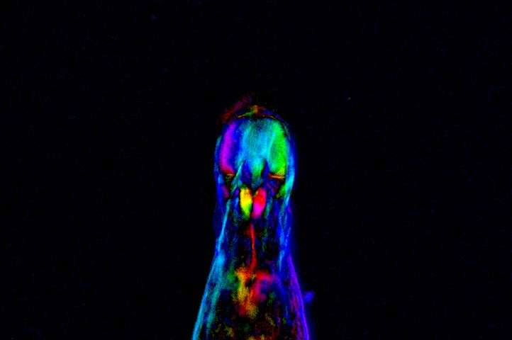 Newly discovered DNA sequences can protect chromosomes in rotifers