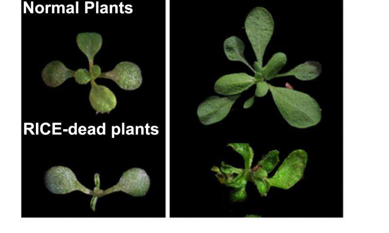 Scientists identify two new proteins connected to plant development