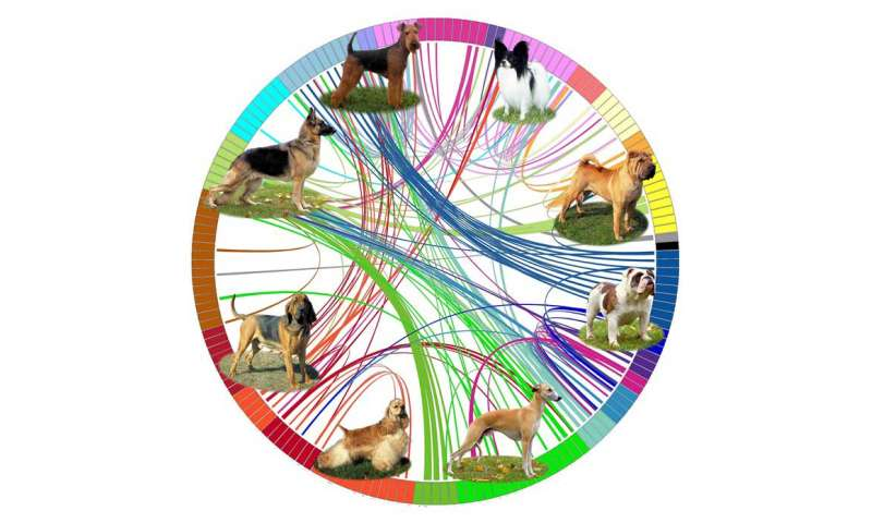 Researchers map the evolution of dog breeds