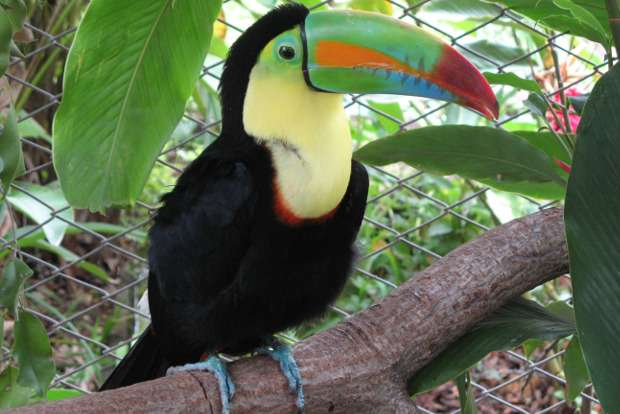 Study reveals new insights into the dining habits of toucans