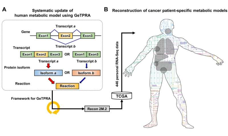 Development of a highly-accurate computational model of human metabolism