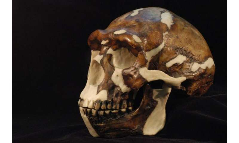 Virtual reality breathes new life into African fossils, art and artefacts