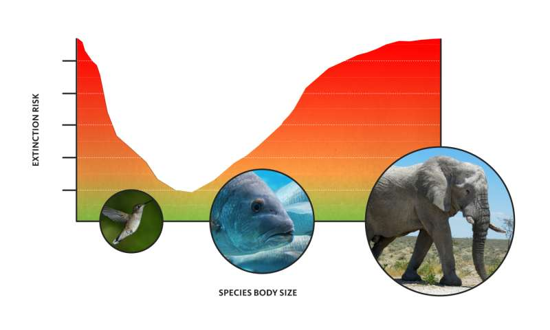 When it comes to the threat of extinction, size matters