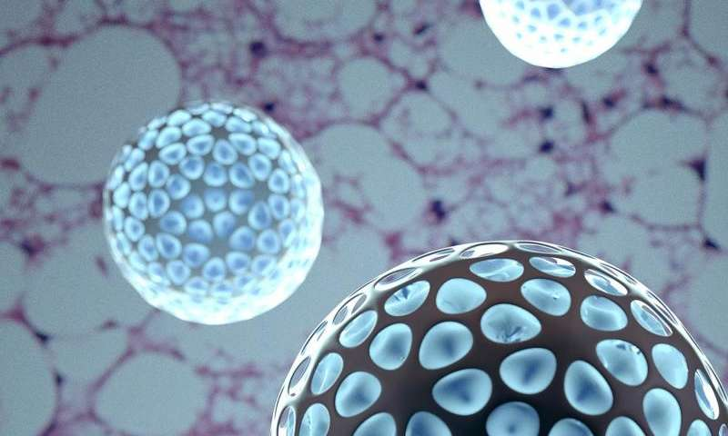 Nanoparticle-drug combo turns white fat to brown fat with potential to treat obesity, diabetes