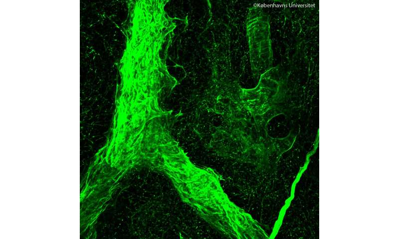 New technique unveils 'matrix' inside tissues and tumors