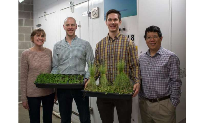 Researchers untangle the molecular mechanisms connecting plant stress and growth