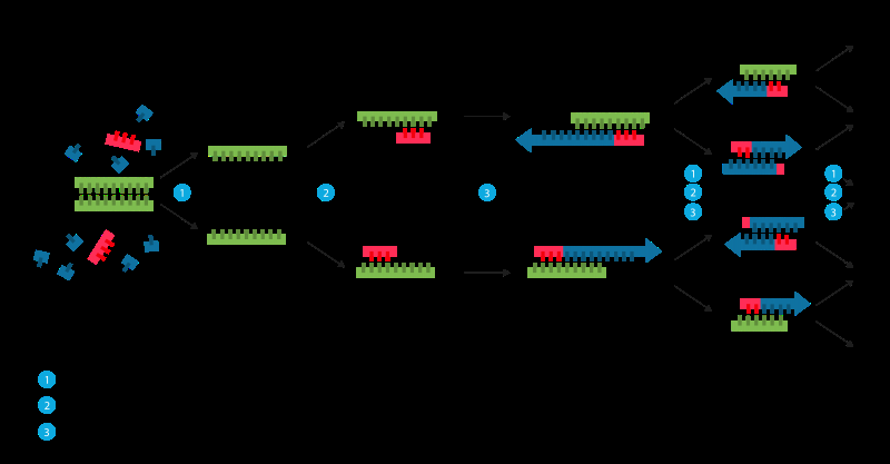 A new approach to amplifying DNA