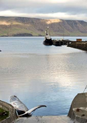 Animal welfare activists say attitudes to whaling are changing and what has been a part of Icelandic culture for 400 years could