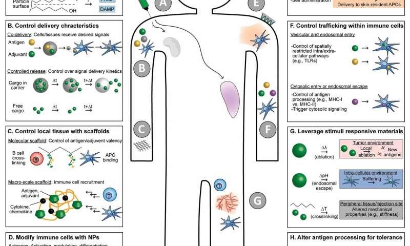 Bioengineers imagine the future of vaccines and immunotherapy