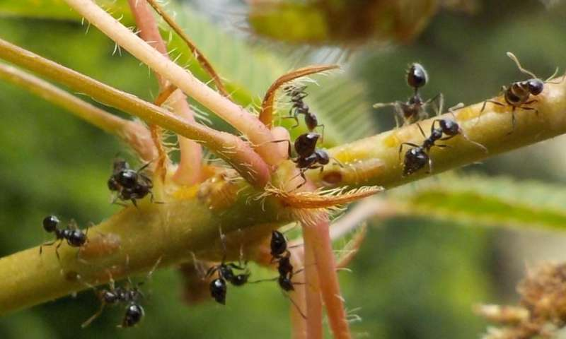 Chemical profile of ants adapts rapidly