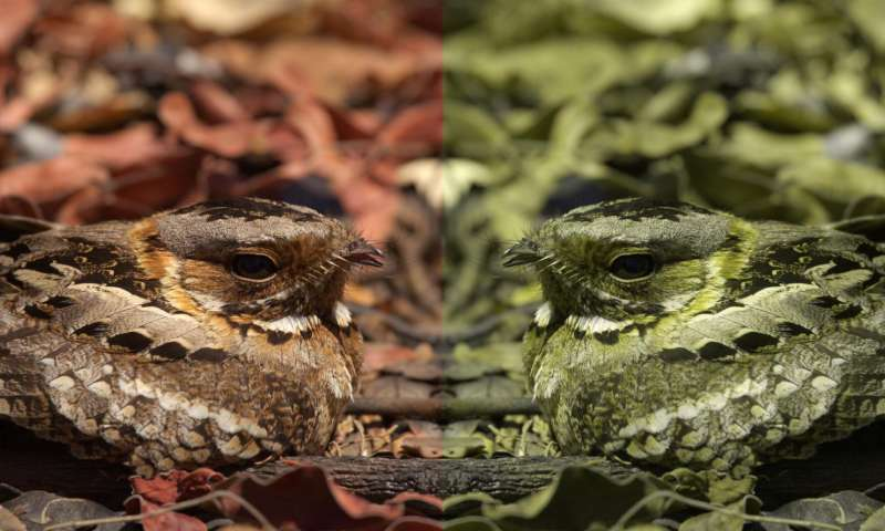 Computer game helps scientists understand animal camouflage
