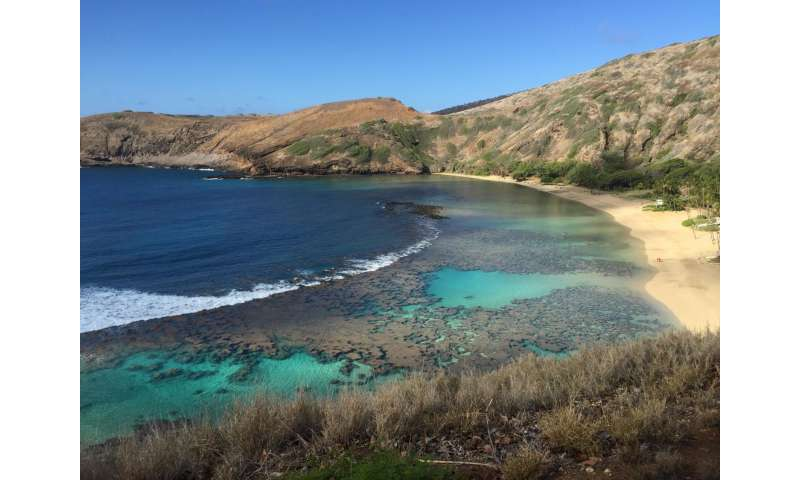 Corals in peril at a popular Hawaiian tourist destination due to global climate change