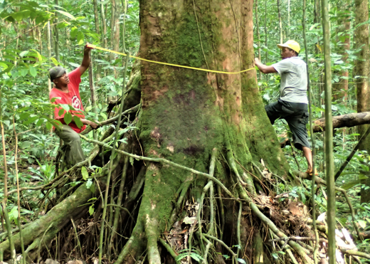 Delving into the heart of Príncipe Island's forests