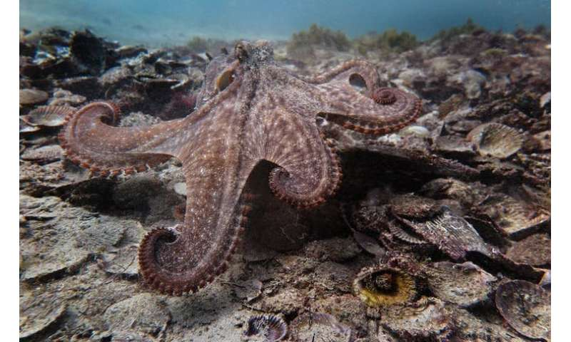 Did they mean to do that? Accident and intent in an octopuses' garden