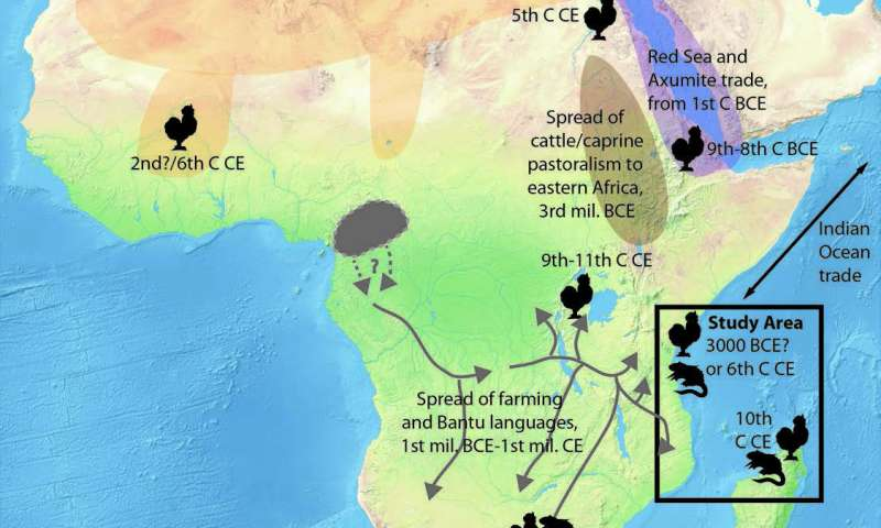 Early Indian Ocean trade routes bring chicken, black rat to eastern ...