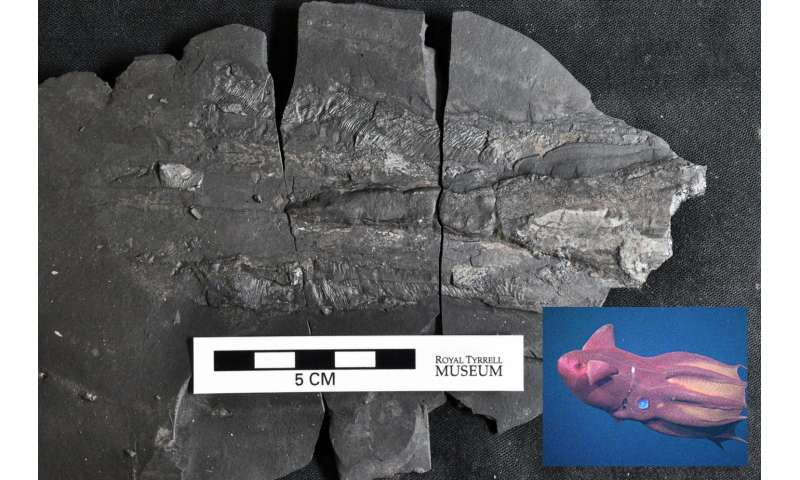 Exceptionally preserved Jurassic sea life found in new fossil site