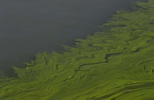 Farm runoff and the worsening algae plague