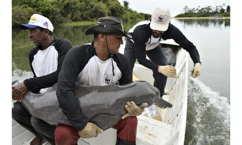 First-ever tagging of Amazon dolphins to boost conservation efforts