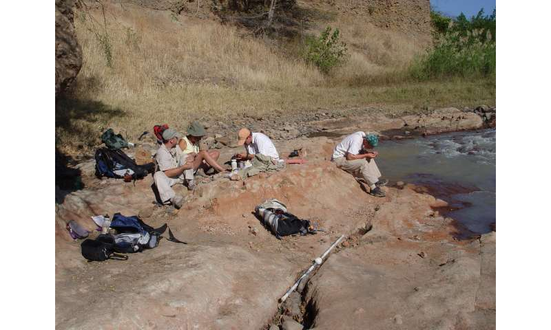 Fossil discovery in Tanzania reveals ancient bobcat-sized carnivore