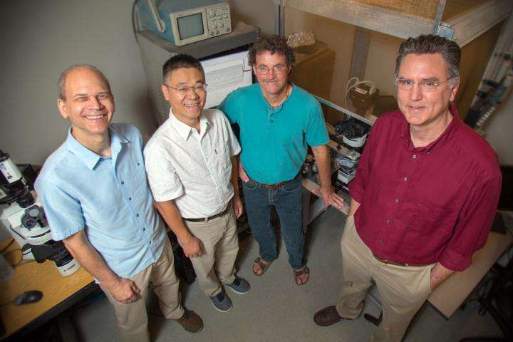 FSU researchers listen to birdsong, unlock mysteries of brain