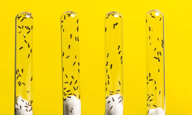 How do genes get new jobs? Wasp venom offers new insights