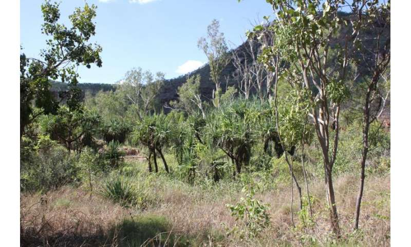 'Lost' forests found covering an area two-thirds the size ofAustralia