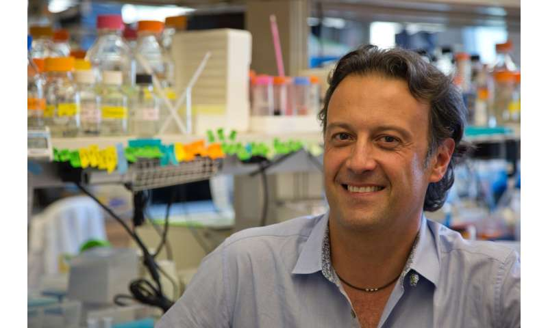 Ludwig researchers uncover mechanism behind metabolic vulnerability of some breast cancers