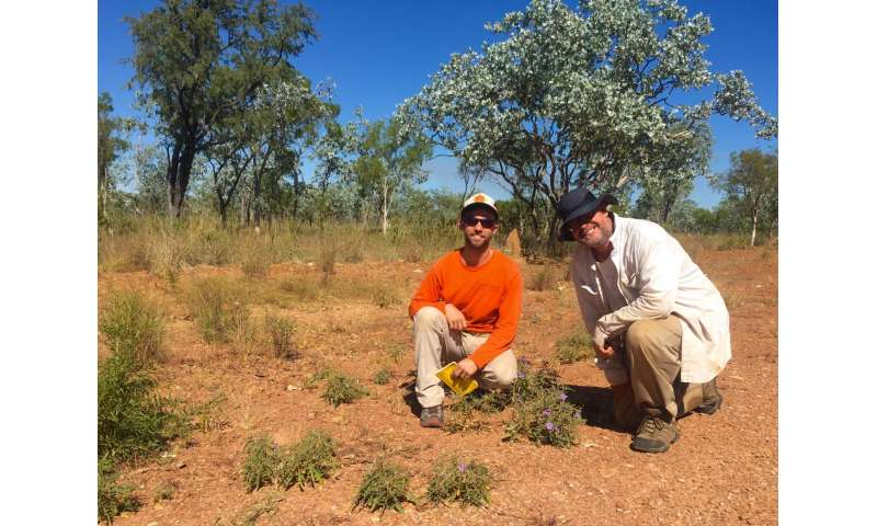 Newly established, a national park in Australia unveils a new plant species
