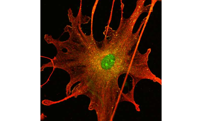 New research offers hope to neuro-tumor patients