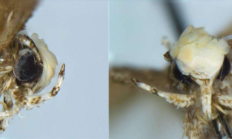 New species of moth named in honor of Donald Trump ahead of his swearing-in as president