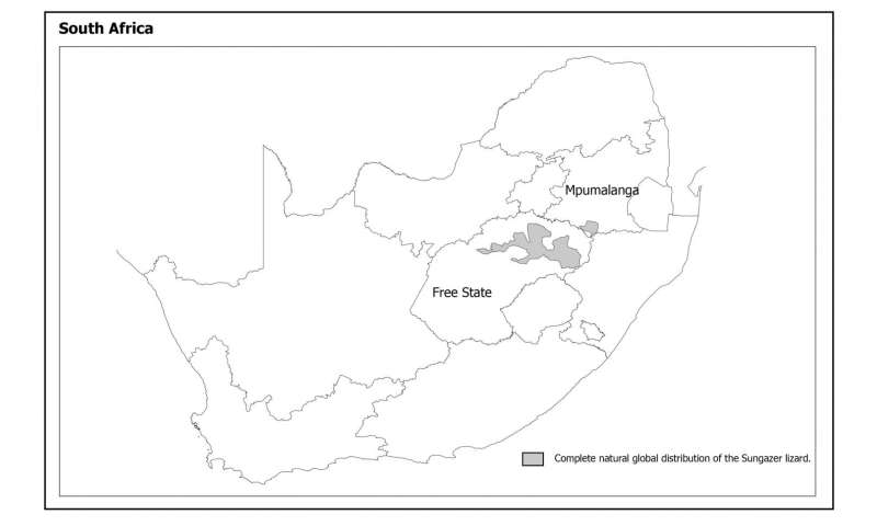 Popular sungazer lizards under threat from poaching