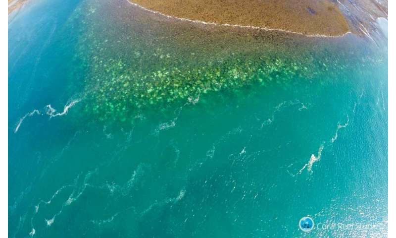 Research examines impact of coral bleaching on Western Australia's coastline