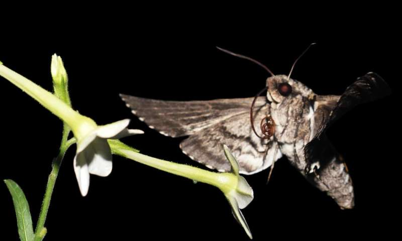 Running roaches, flapping moths create a new physics of organisms
