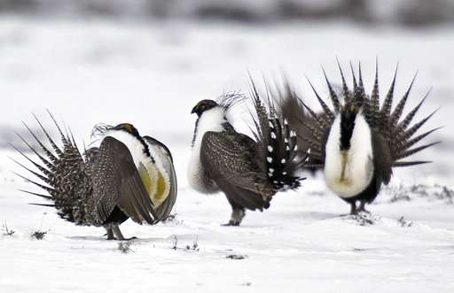 Sage grouse conservation changes draw mix of praise, alarm