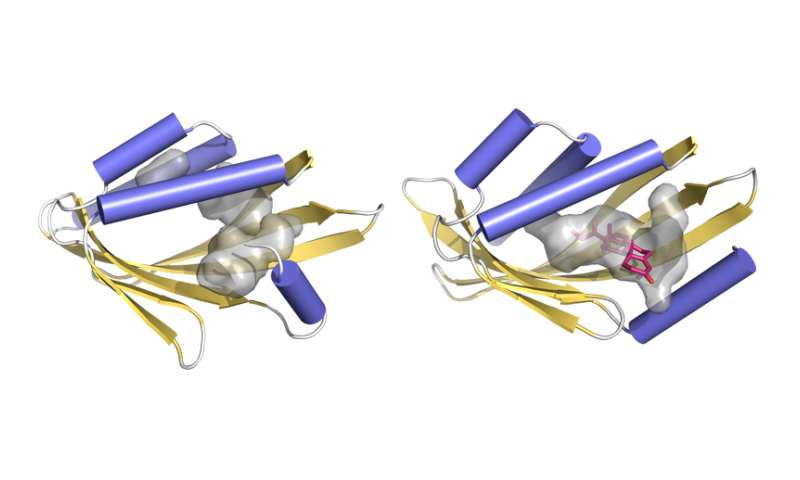 Study reveals way to design key protein-binding structures