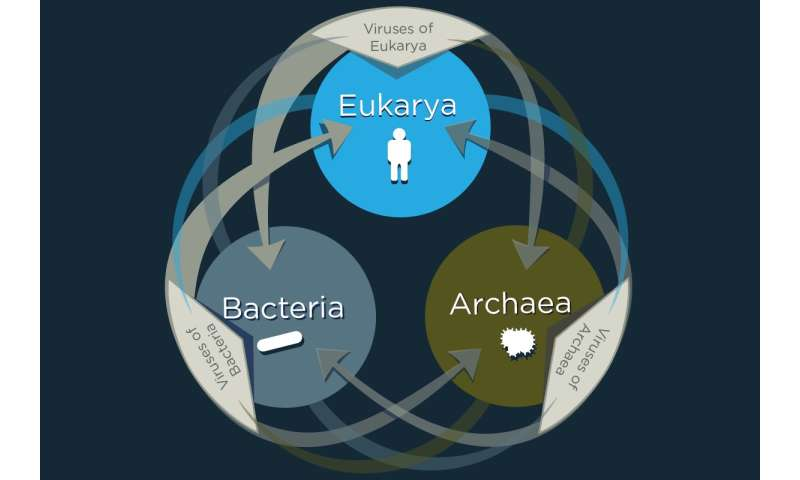 Study: Viruses share genes with organisms across the tree of life