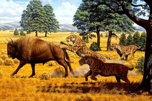 The dangers of being a saber-toothed cat in Los Angeles 12,000 years ago