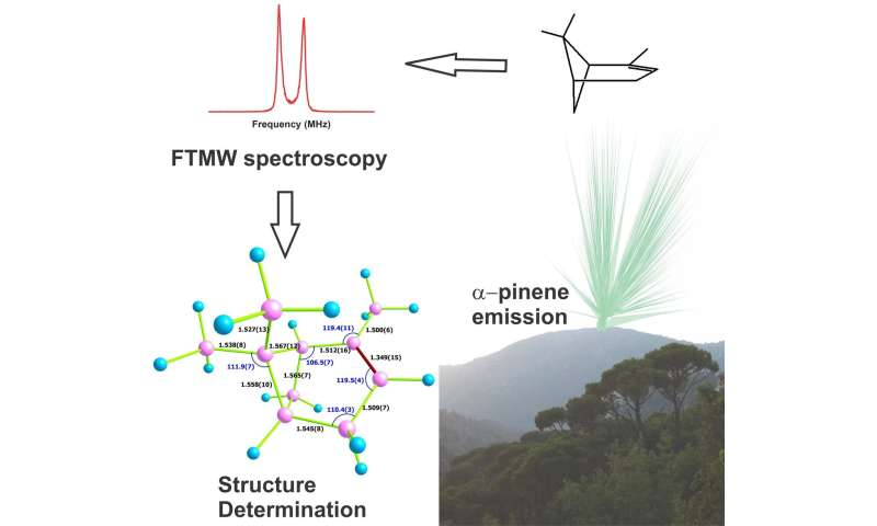 The molecular structure of a forest aroma deconstructed