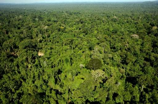 The rainforest has a wealth of valuable commodities but has been protected for decades from private industry and is home to seve