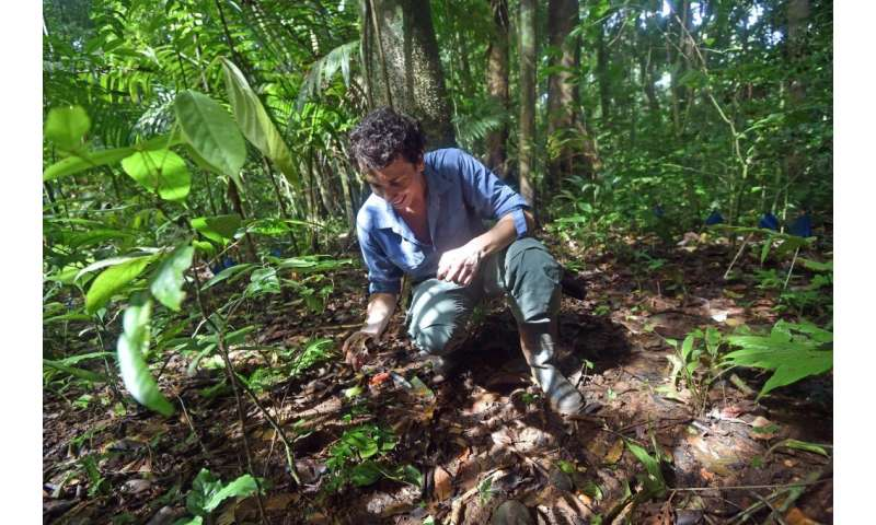 Tropical diversity takes root in relationships between fungi and seeds