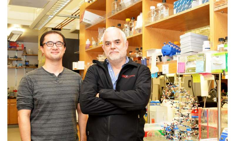 TSRI scientists create first stable semisynthetic organism