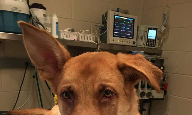 Veterinarians caution that antifreeze is poisonous to pets and humans